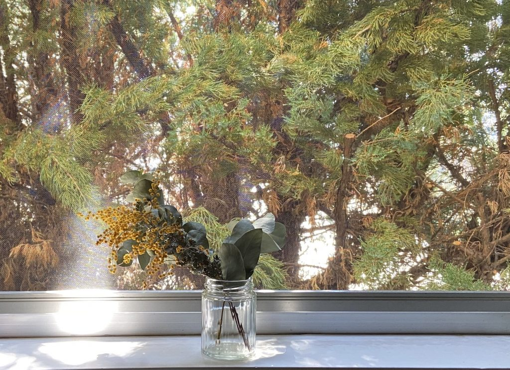 窓際にミモザのドライフラワー。