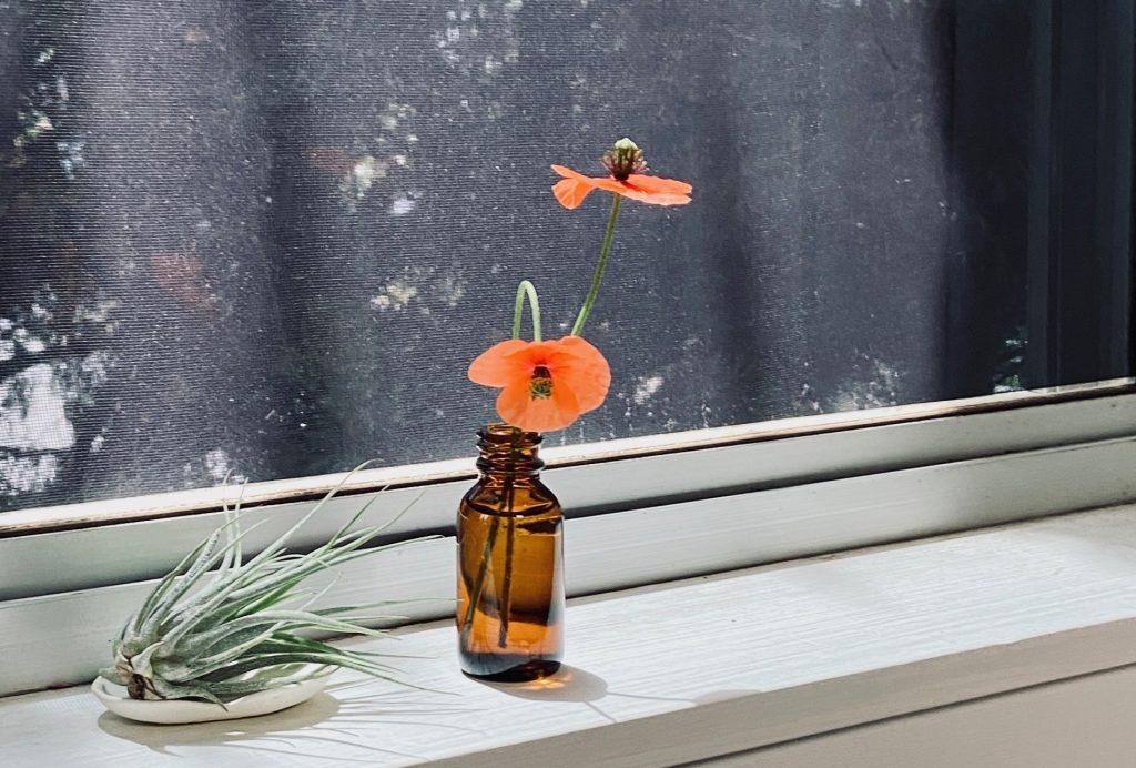 窓辺に置いた植物(ポピーとエアープランツ)