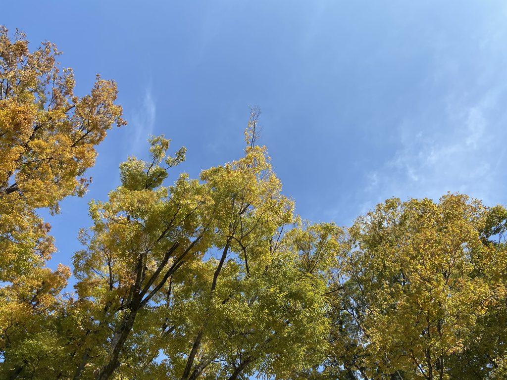 冬晴れの空と紅葉している木