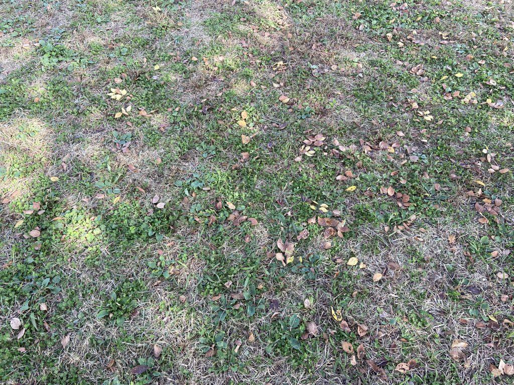 落ち葉のある、公園の地面